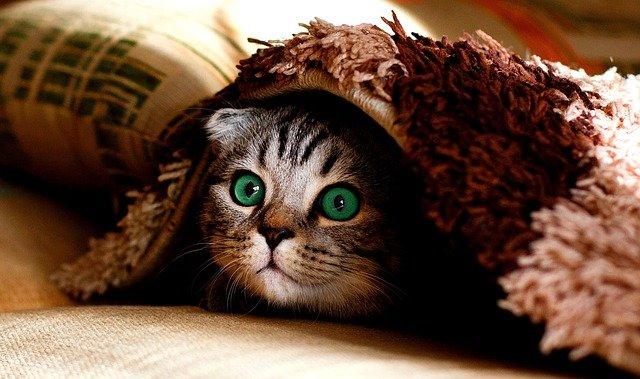Por qué tu gato es incluso más interesante de lo que creías