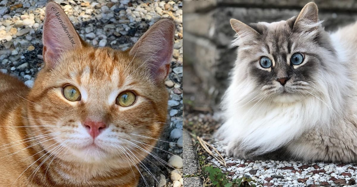 Los veterinarios explican por qué los gatos nos miran, es posible que te sorprendas