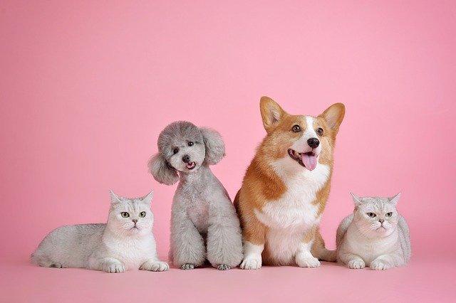 Cómo ayudar a un gato y a un perro a llevarse bien