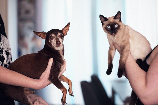 Gato o Perro – ¿Cuál es el adecuado para ti?