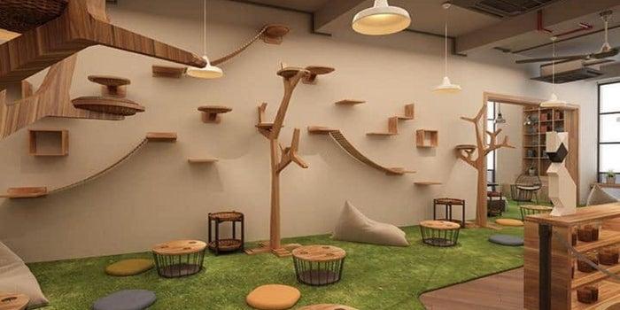 Ideas para diseñar y organizar una habitación para gatos