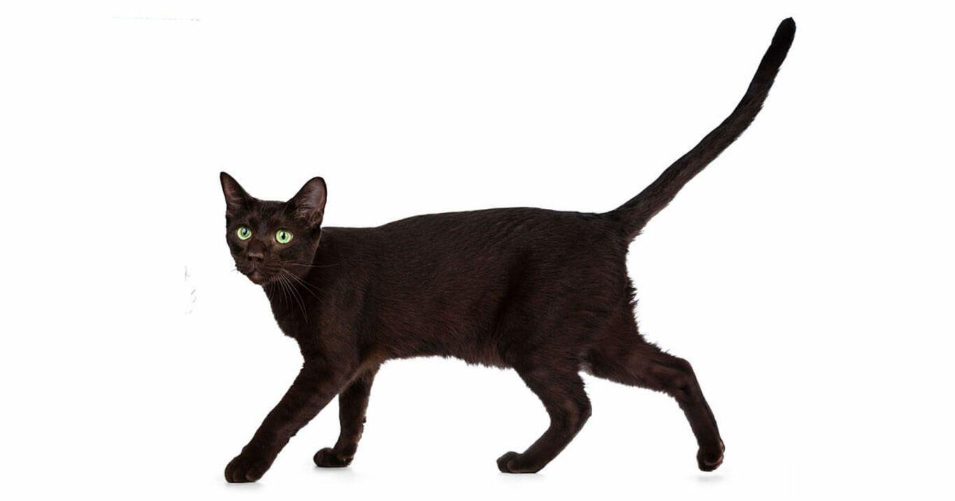 Información sobre gatos que no sabías