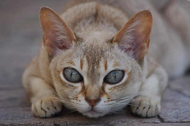 Todo lo que necesitas saber sobre los gatos