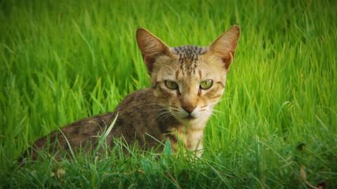 Mi gato come hierba, ¿cuál es el gran problema?