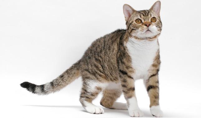 Cómo ayudar a tu gato ansioso