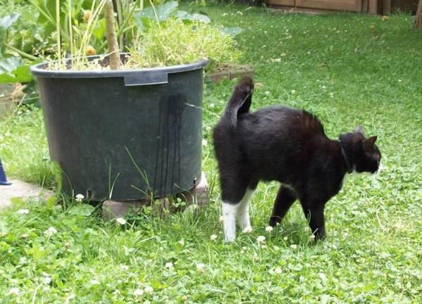 7 razones lógicas del porqué los gatos rocían la casa