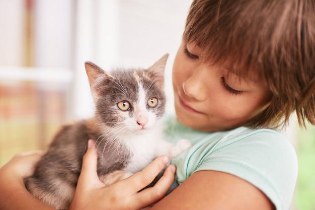 Cuidado de un gatito: consejos e información útil para llevar a tu nuevo bebé a casa
