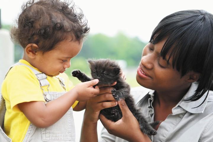 Cómo encontrar el gato perfecto para tu familia