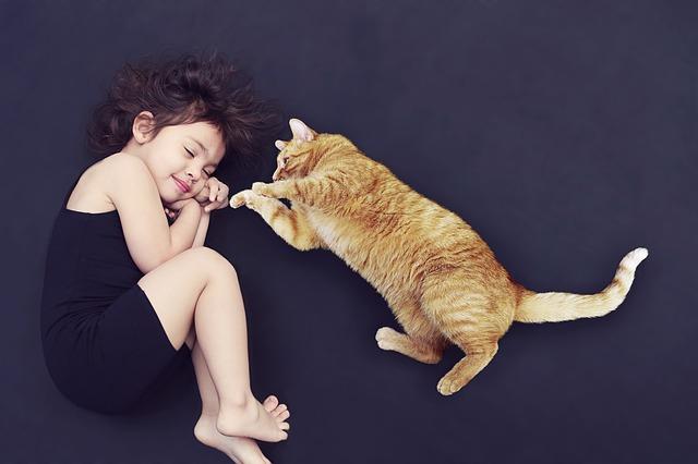 Cuidados en las diferentes etapas de vida de tu gatito