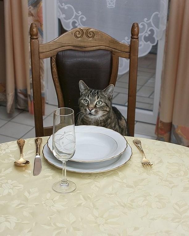 8 comidas humanas que no debes dar a tu gato