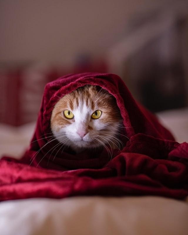 Psicología del gato – ¿Mi gato tiene miedo?
