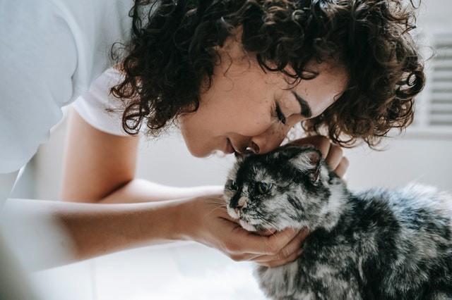 Cómo tu gato puede enseñarte a ser un mejor dueño