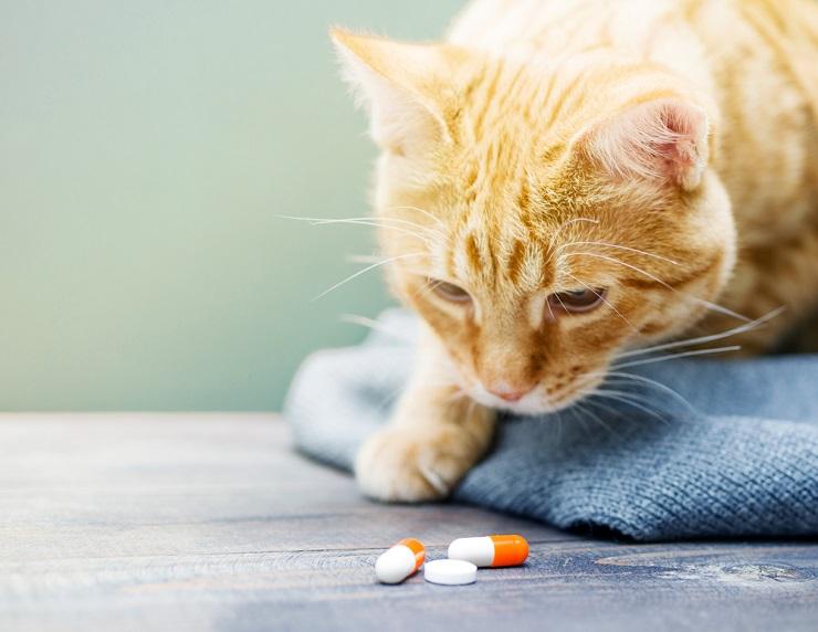 Gabapentina para gatos