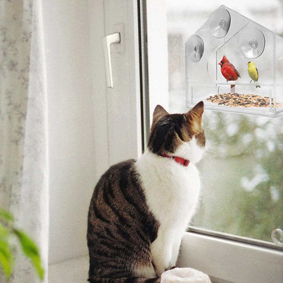 5 actividades en las que a los gatos les encanta participar siempre que pueden