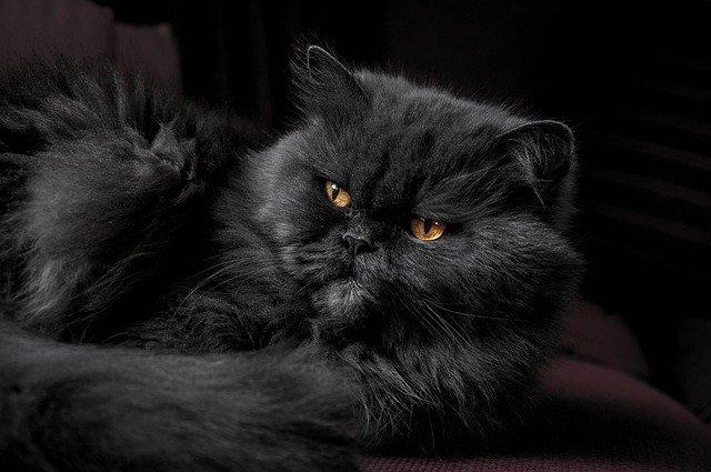 4 razones por las que el pelaje de tu gato cambia de color con el tiempo