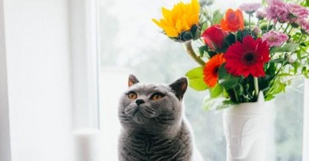 Evita estas plantas tóxicas para los gatos