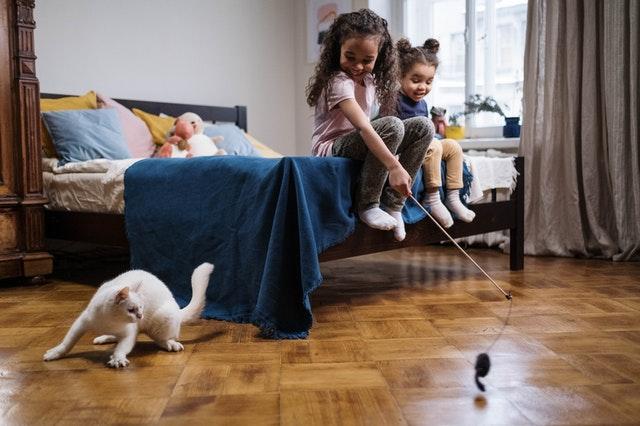 Los fundamentos del adiestramiento de gatos