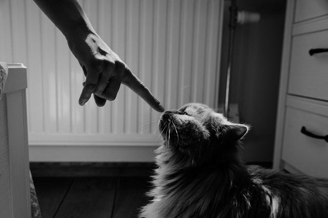 3 cosas que nunca debes hacer como dueño de un gato