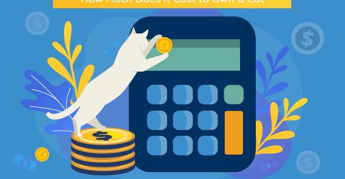 ¿Cuánto cuesta tener un gato?