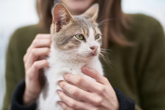 Mantener la salud de tu gato
