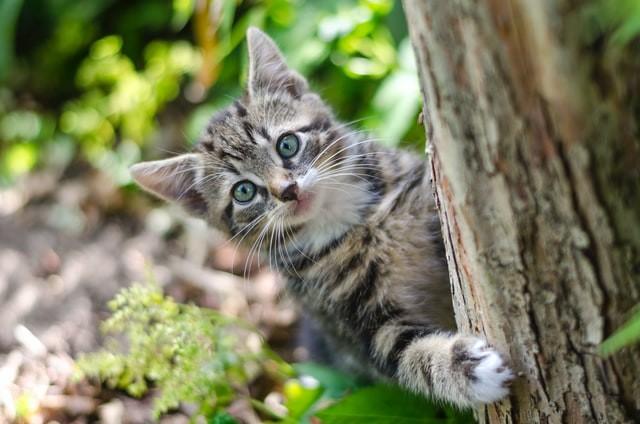 ¿Cuáles son algunas de las actividades favoritas de los gatos?