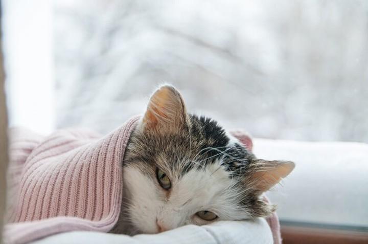 10 señales sutiles de que tu gato puede estar enfermo