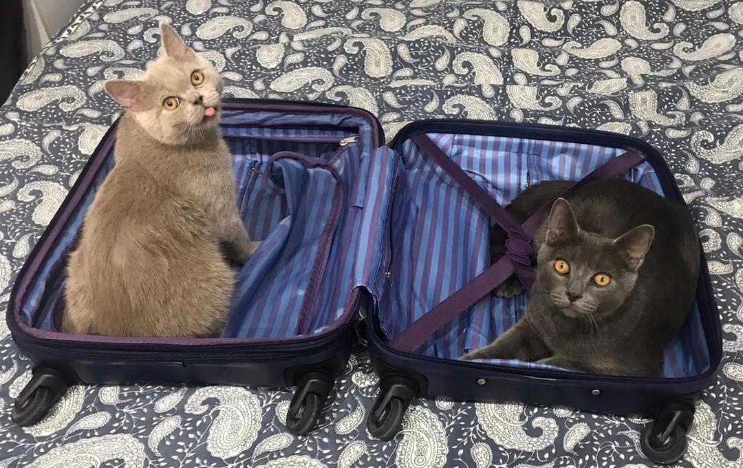 Consejos para viajar con un gato