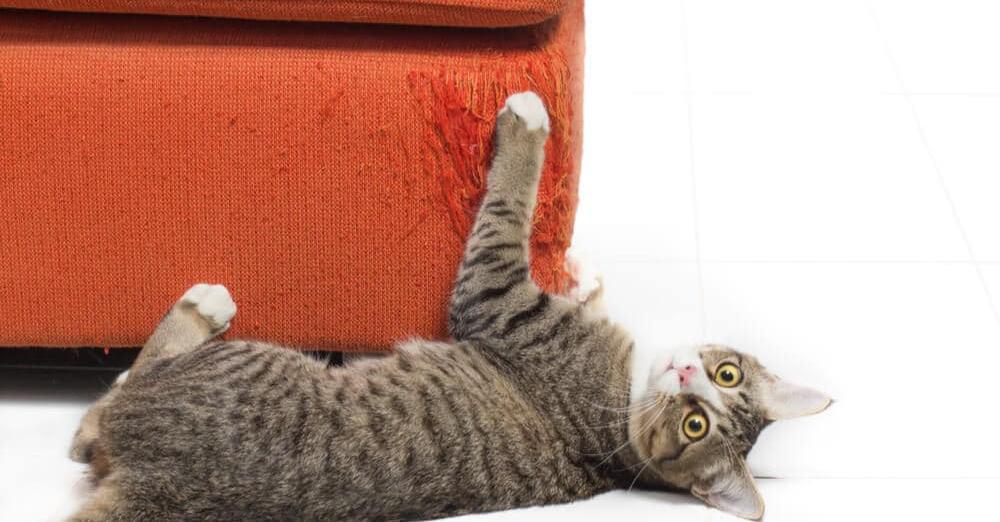 Cómo evitar que tu gato raye los muebles