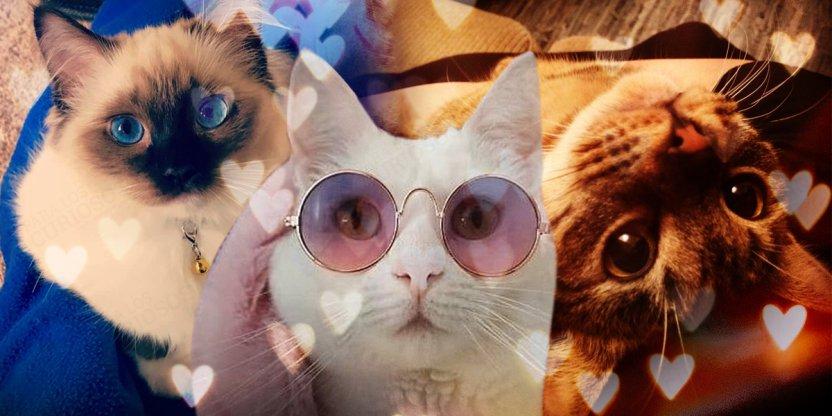 ¿Por qué amamos tanto a los gatos?