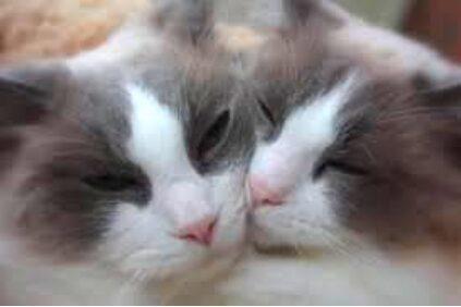 Por qué es tan fácil enamorarse de los gatos