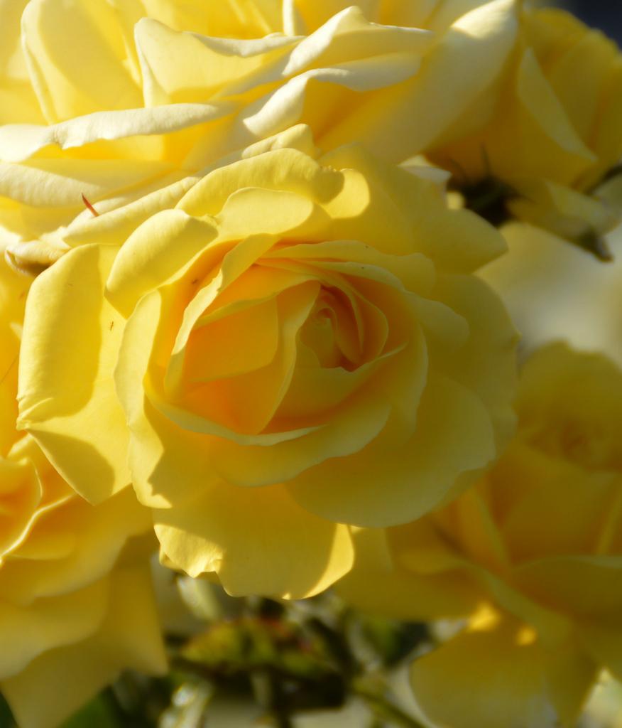 01. La reina de las flores
