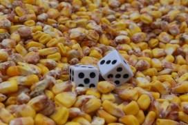 Josianne Béland Les dés perdu dans le maïs