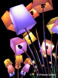 Bouquet de lumières2