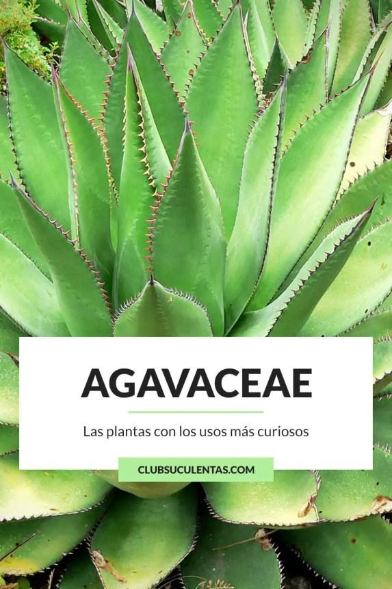 Agavaceae Agaváceas