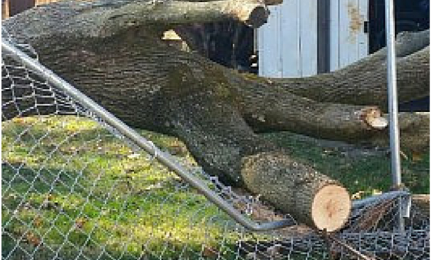 A Tree Fell at Our Rental House: Here's What We Did