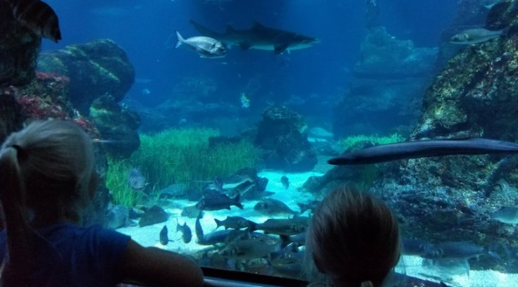 Barcelona aquarium - Barcelona Pass review