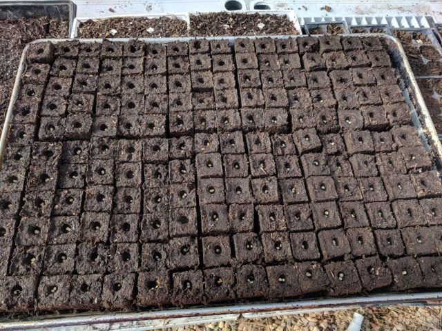 Soil Block VS Potting Tray