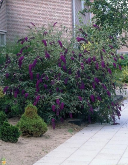 Modern Shade Front Yard Design Ideas For Summer44