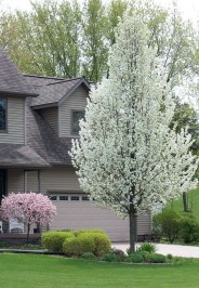 Comfy Flowering Tree Design Ideas For Your Home Yard03