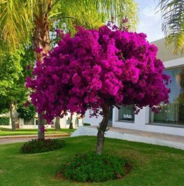 Comfy Flowering Tree Design Ideas For Your Home Yard05