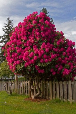 Comfy Flowering Tree Design Ideas For Your Home Yard06