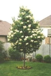 Comfy Flowering Tree Design Ideas For Your Home Yard09