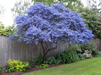 Comfy Flowering Tree Design Ideas For Your Home Yard11