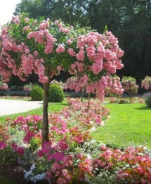 Comfy Flowering Tree Design Ideas For Your Home Yard12