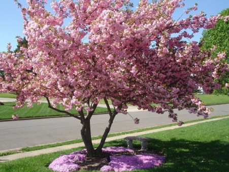 Comfy Flowering Tree Design Ideas For Your Home Yard15