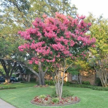 Comfy Flowering Tree Design Ideas For Your Home Yard20