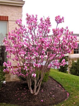 Comfy Flowering Tree Design Ideas For Your Home Yard28