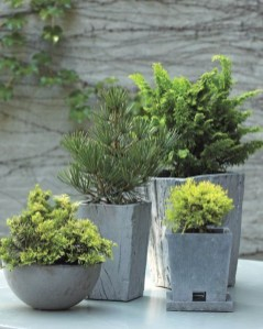 Sophisticated Container Garden Flower Ideas For This Winter To Try03
