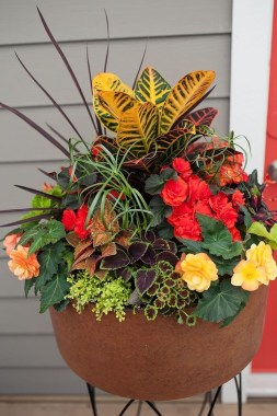 Sophisticated Container Garden Flower Ideas For This Winter To Try06