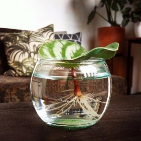 Awesome Indoor Water Garden Design Ideas That Refresh Your Interiors12